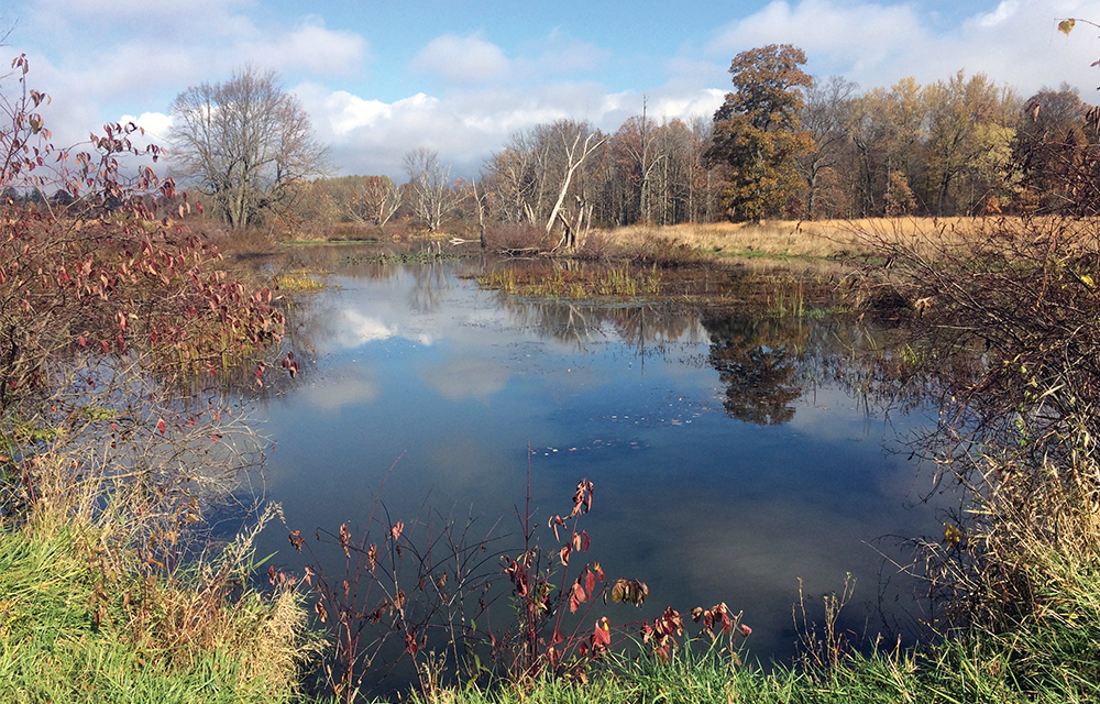 The 92-acre Cambridge Springs Natural Area in Crawford County, PA, is located in the French Creek watershed, adjacent to State Game Land 277. It is open to the public for hunting, hiking, and wildlife watching.